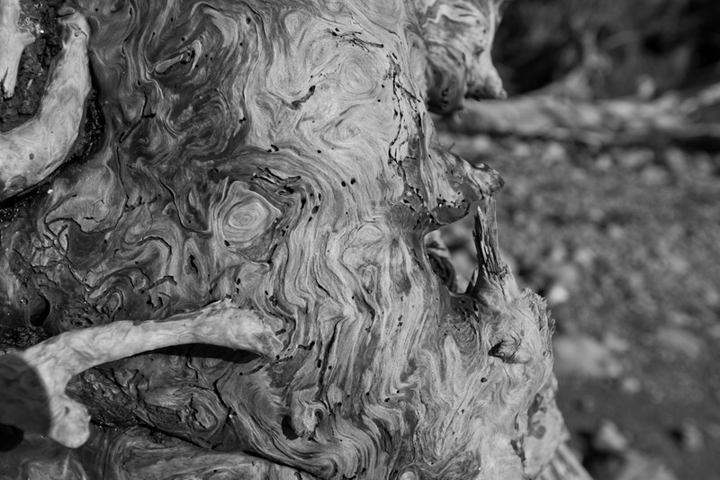wood grain BW