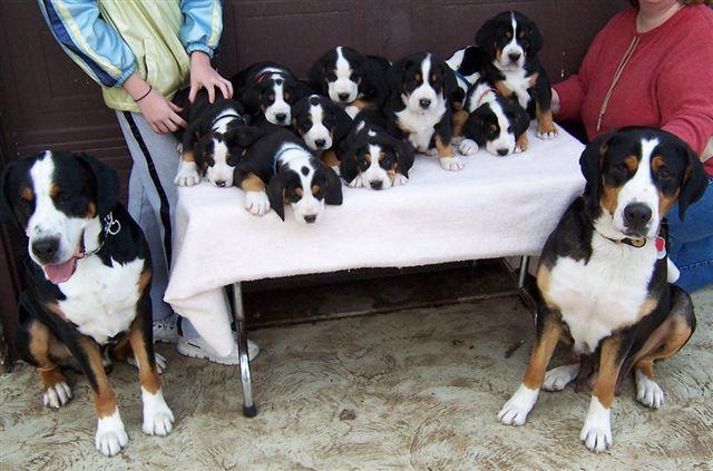 Halie, Moose & pups, 2-20-05, 02, C.JPG