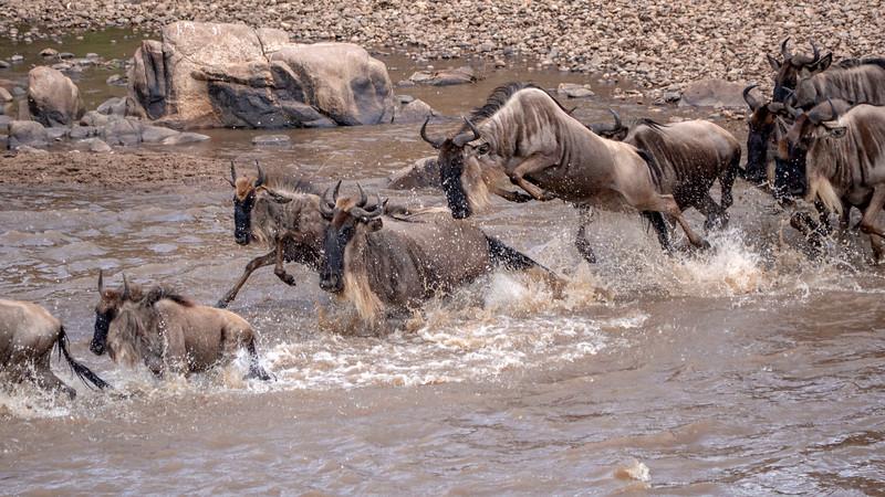 Tanzania-Serengeti-National-Park-Safari-Great-Migration-Wildebeest-04.jpg