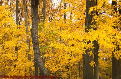 Big Creek Res Fall 2013