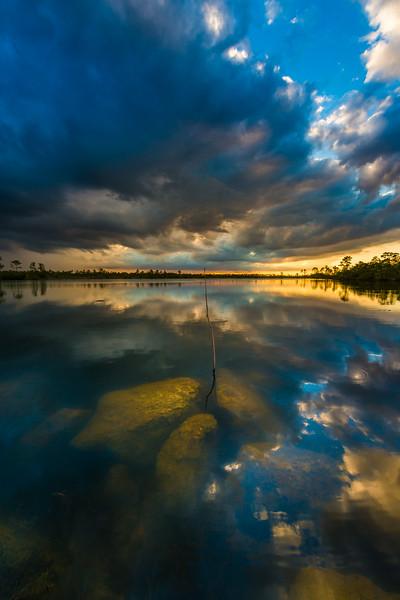 Everglades (19 of 60).jpg