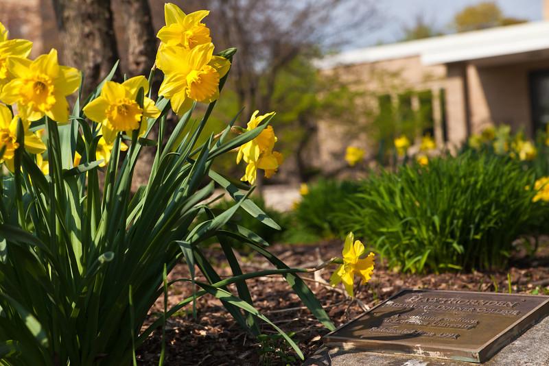 SpringFlowers-2.jpg