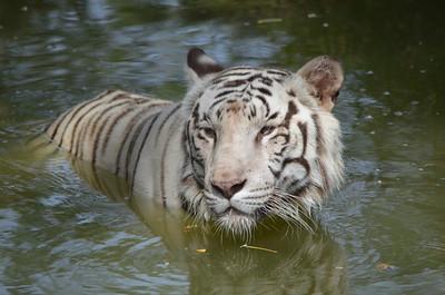 Nehru Zoological Park - Hyderabad Zoo - Part 6