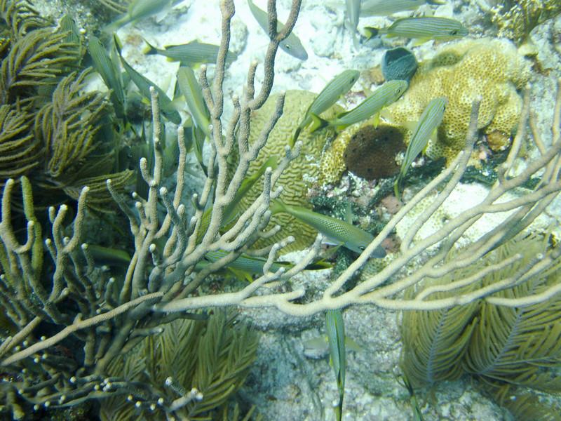 islamorada-diving-11.jpg