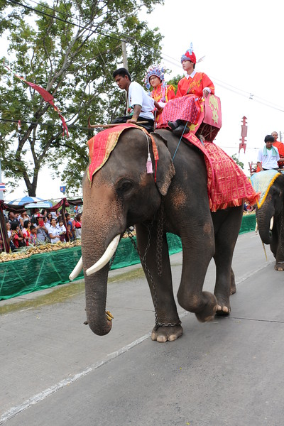 2014-11-14 Surin Elephant Welcome Feast 205.JPG