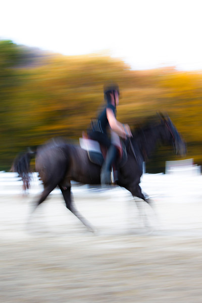 The 2013 Horse Team