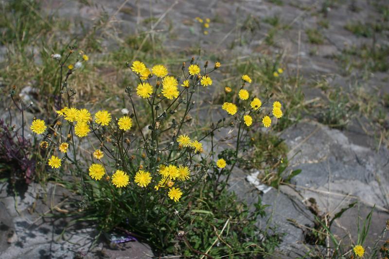 Flowers on El Panecillo