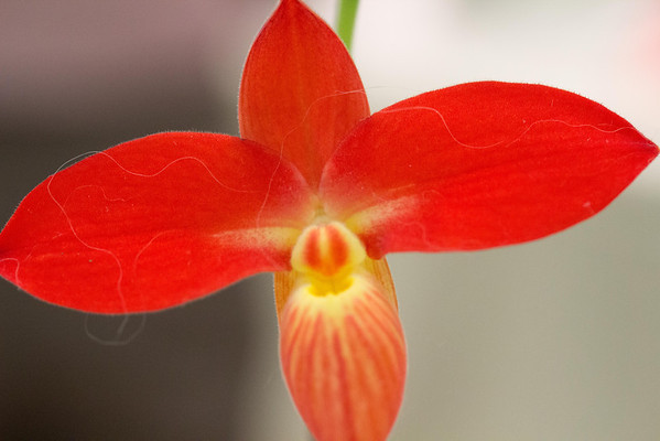 Orchid Show_September 22, 2013