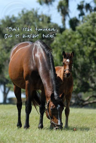 Florida Mares & Foals