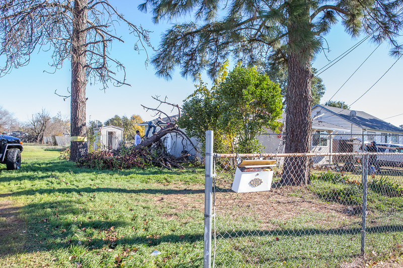 5671 Wallace Ave - Tree 1030am 12 16 2017 Extremly Windy Conditions-93.jpg