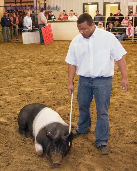 2010-09-29 Hogs 1100-1200