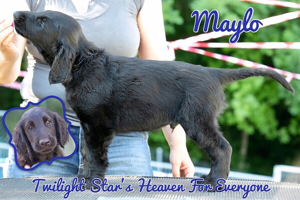 """Twilight Star's Heaven For Everyone """"Maylo"""""""