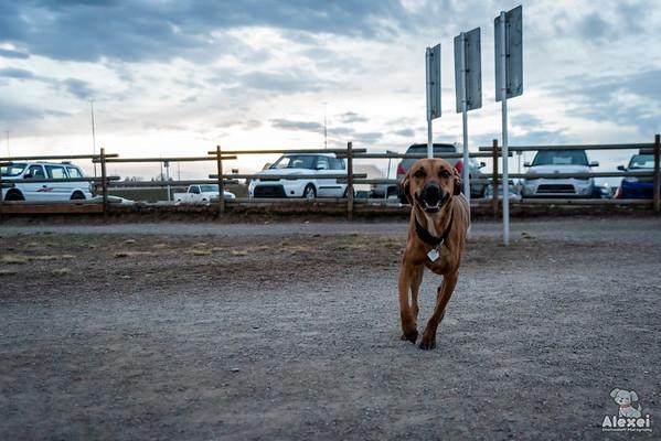dogparkmarchapril2019