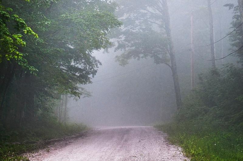 208 Scenic White Birch Lane Fog LoRes.jpg