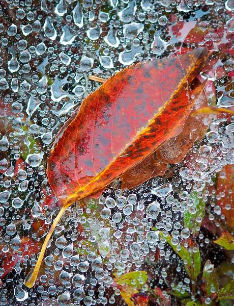 Leaf on web.jpg
