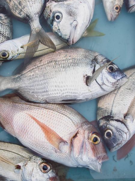 marseille fish market 4.jpg