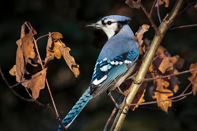 Birds - CVNP Fall 2012