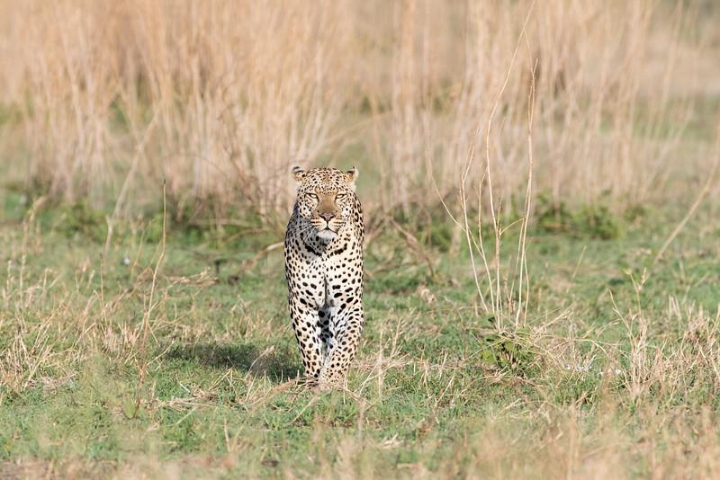 Africa - 101616 - 5222.jpg