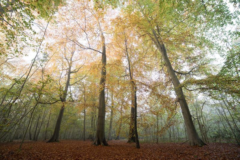 Bisham_Woods-2.jpg