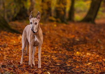 Autumn Penny