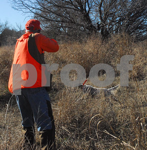 hunters-should-still-find-quail-although-numbers-have-dipped