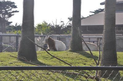 San Francisco Zoo 2 January 2010