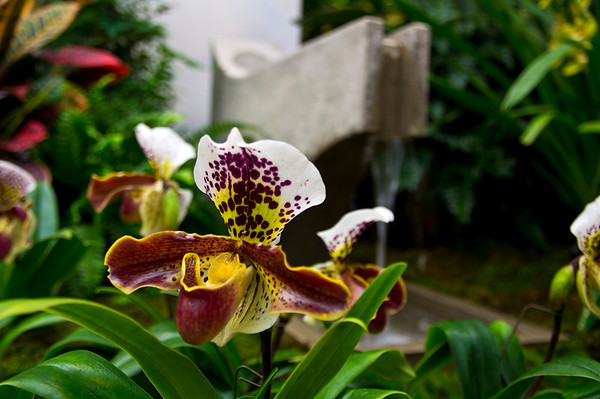 Orchid Show at Missouri Botanical Gardens