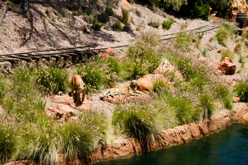 Lionesses on the banks of The Rivers Of America