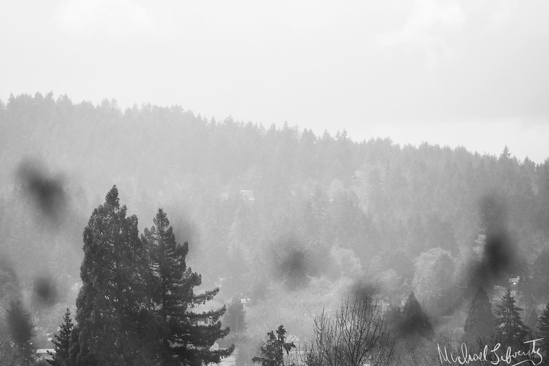 foggy 2018 (1 of 1).jpg