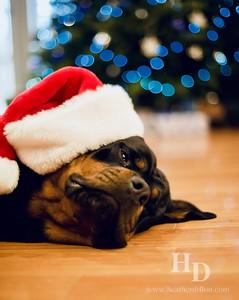 2018-12 Christmas Dogs