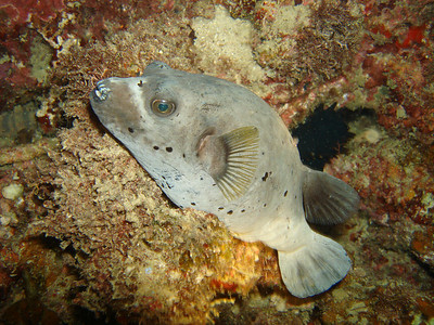 Diving: Pulau Aur