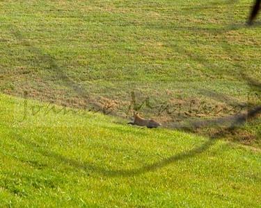 Blue Ridge Hunt at Shannon Hill 12-29-15
