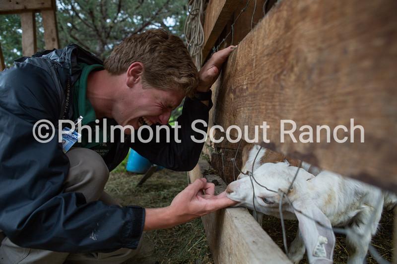 2_2015_Humor_StephenMaurer_Goat Feeding_Abreu_203.jpg