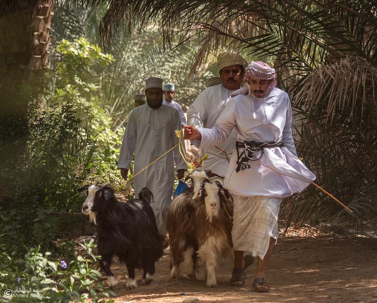 P1004529-2-Saroor-Samail- Oman.jpg