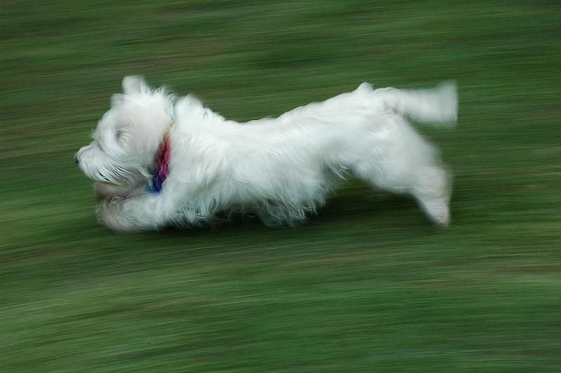 Run Maggie Run.jpg