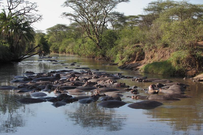 Hippos in Retina River 2.JPG.JPG