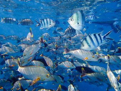 French Polynesia: Rangiroa
