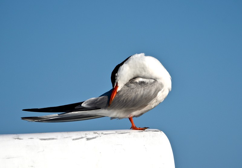 Tern Yoga.jpg