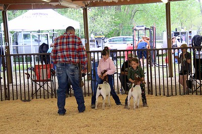Pee Wee Goat Showmanship