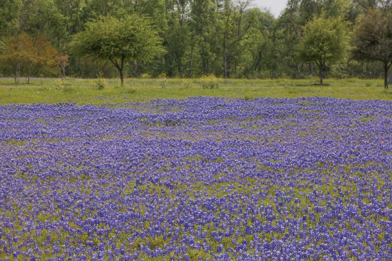 2015_4_3 Texas Wildflowers-7910.jpg