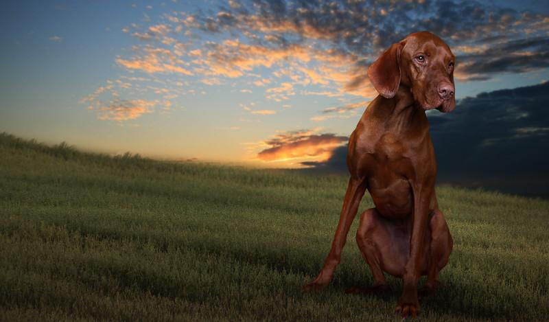 saule-dog-12.jpg
