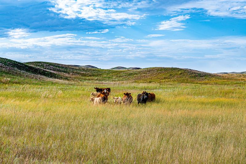 Horn Ranch-1308.jpg