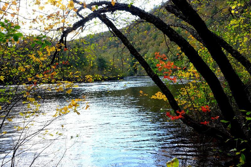 leaves river.jpg