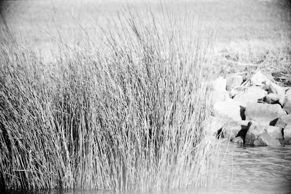Outer Banks Wetlands in Black and White