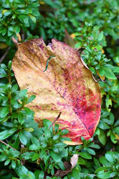 Portland Japanese Garden  11-11-11  3501.jpg