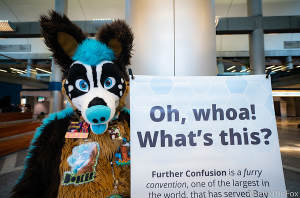 Further Confusion 2019
