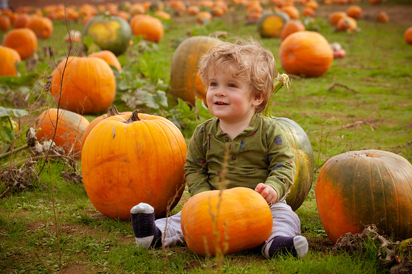 Pumpkin Patch Prints