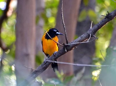 Puerto Rico Birding_12.2014