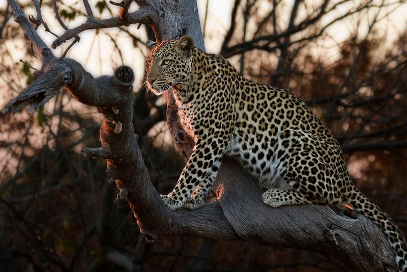 Africa (4) - David Speltdoorn.jpg