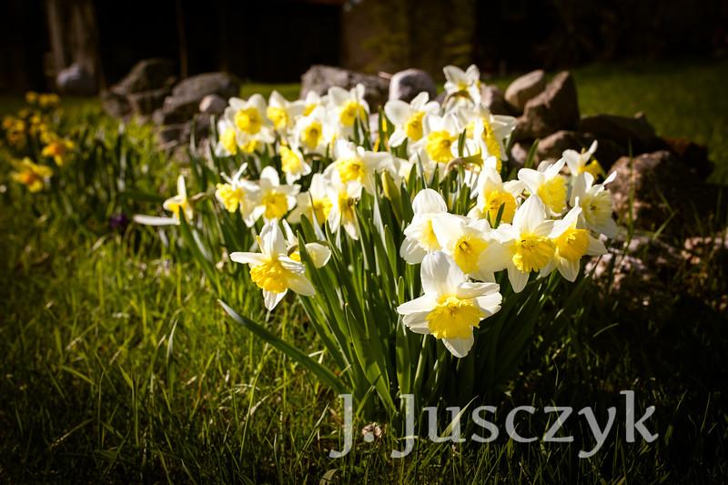 Jusczyk2021-7560.jpg